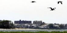 Программы уничтожения птиц в аэропортах были активизированы после аварии 2009 года, когда реактивный лайнер был вынужден приводниться на реку Гудзон, из-за птиц, попавших в двигатель